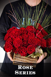 Rose Arrangements aailable for Dallas Delivery